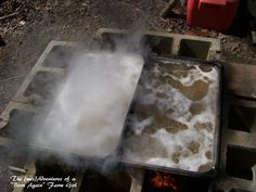 Boiling sap to make maple syrup