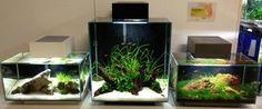 Fluval Edge shop displays | AquaScaping World Forum
