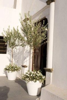 Olive decoration at Church entrance. event design StellaAndMoscha.com