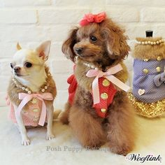 Posh Puppy Boutique is a shop for designer dog clothes and accessories -Posh Girl Coat- Red puppy Shop By Designer - Wooflink Collection, pet toys, collars, carriers, treats, stunning bowls, diaper, belly bands, id tags, harnesses, apparel