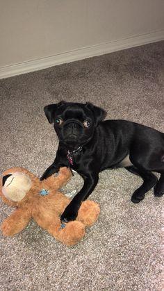 Most Inspiring Cuby Chubby Adorable Dog - 8c9696f8042155fb5340b21cd74b47b8  Pic_205035  .jpg