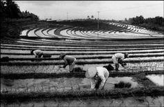 © Abbas/Magnum Photos INDONESIA. Bali. Ricefields. 1989.