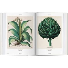 Basilius Besler's Florilegium. The Book of Plants ❤ liked on Polyvore featuring fillers, books, green, accessories and backgrounds