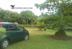 Malawi Car Transfers, Car and Driver Hire, Online Accommodation Bookings, Tours, Chichewa and Tumbuka Language and Culture Campsite, Lodges, Palm, Tours, Places, Travel, Camping, Lugares, Viajes