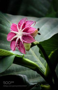 #nature Flower 77 by kel1310