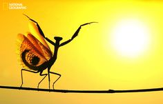 Photo and caption by Hasan Baglar / National Geographic Photo Contest. When the Mediterrenean Mantis opened its wings, It seemed very impressive at the sunshine… Photo location: Nicosia, Cyprus. National Geographic Photo Contest, National Geographic Society, Photos Du, Great Photos, Funny Photos, Amazing Nature Photos, Beautiful Pictures, Concours Photo, Iceland Waterfalls