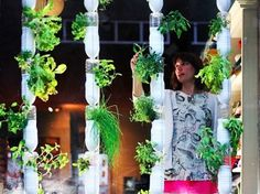 Windowfarm apartment vegetable gardening idea