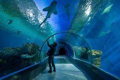 Northern Europe's largest aquarium in Copenhagen