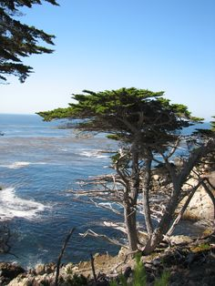 Carmel, California- been ( might as well be 3rd home)