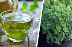 Τσάι Ρίγανης: Ποιες Ασθένειες Θεραπεύει; Μάθετε για τις Αντικαρκινικές και Αντισηπτικές του ιδιότητες Diabetes, Natural Remedies, Cucumber, Health Tips, Herbalism, Herbs, Vegetables, Drinks, Food