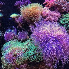 - Click the link to see the newly released collections for amazing beach bikinis! Saltwater Aquarium Setup, Saltwater Fish Tanks, Marine Aquarium, Reef Aquarium, Underwater Creatures, Ocean Creatures, Underwater World, Surfboard Painting, Coral Garden