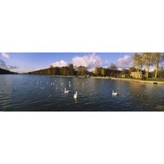 Flock of swans swimming in a lake Chateau de Versailles Versailles Yvelines France Canvas Art - Panoramic Images (18 x 7)