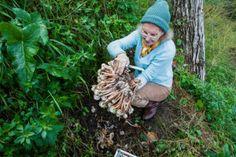 Como cultivar cogumelos em casa de forma fácil e divertida