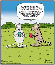 Today on Half Full - Comics by Maria Scrivan Cute Funny Animals, Funny Cats, Guitar Boy, Technology Humor, Cat Comics, Facebook Humor, Calvin And Hobbes, Just For Laughs, Cat Cartoons