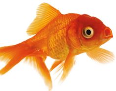 YOU are NOT a fish--an important conversation to have with your child on dealing with people who try to annoy. It's a GREAT anger management tool for the distractible child.