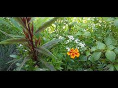 The Sound of Silence 16 September 2020 September, Spirituality, Natural, Garden, Plants, Garten, Lawn And Garden, Spiritual, Gardens