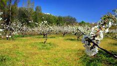 El valle del Jerte y otros diez reinos de los cerezos en flor