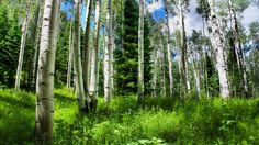 брёзы, Природа, трава, россия, небо, лес, ель, 2560x1700