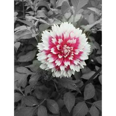 Sigurtà Garden Park - 2014