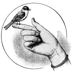 Cool Pictures Of Books | Vintage Illustration of a Bird Perched on a Finger – Click for ...