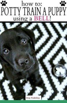 Dog Breeds A Z Dogtraining And Leash Training Cane Corso Dog