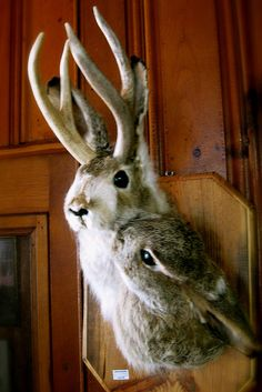 Male and female Jackalope. Need this for our bar