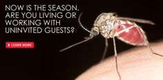 Mosquito Facts: What you need to know Envirocare Pest Control, LLC