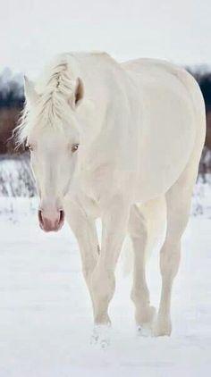 White....Blanc de Blanc,,,,,y neige,,,,**+