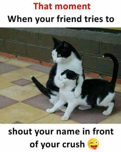 Very interesting post: 24 Funny Cats and Kittens Pictures.сom lot of interesting things on Funny Animals, Funny Cat. I Love Cats, Crazy Cats, Cute Cats, Funny Cats, Funny Animals, Cute Animals, Animals Images, Funniest Animals, Cats Humor