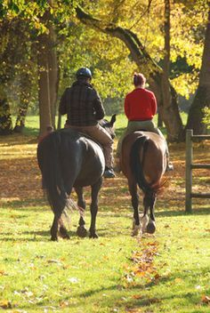 horseback riding date Source Horse Riding Pants, Trail Riding Horses, Horse Riding Quotes, Horse Riding Tips, Horse Quotes, Horseback Riding Outfits, Horseback Riding Lessons, Fall Dates, Dating Blog