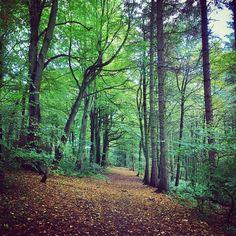 Woodland walk...
