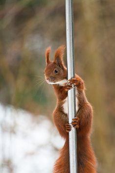 Look Christa!!! It's pole dance!