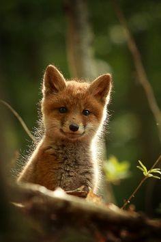 a little foxy....