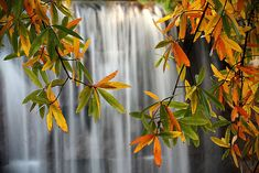 The Secrets of Stunning Waterfall Photography