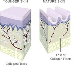 Does Your Skin have to Wrinkle with Age?  The answer might surprise you. When we're young, our skin produces structural proteins, such as collagen and elastin, which provide skin with firmness and elasticity. As we age this production declines, and both collagen and elastin fibers become looser, thicker, and clumped.