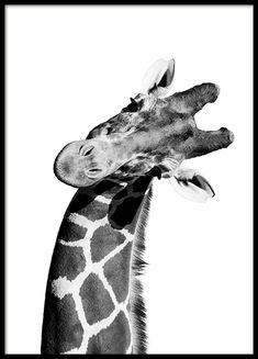 Giraffe Portrait Poster in the group Poster / Animals at Des .-Giraffe Portrait Poster in der Gruppe Poster / Tiere bei Desenio AB Giraffe portrait poster in the group posters / animals at Desenio AB - Love Posters, Cat Posters, Animal Posters, Animal Prints, Prada Marfa, Poster Photo, Lion Poster, Groups Poster
