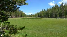 Open Meadow.