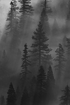 This reminds me of all the trips we took to the mountains, my dad always found the best spots to hike, camp, swim, and just be in the presence of nature..foggy forest