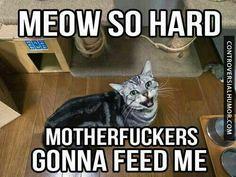 Feeed Meeeee!!