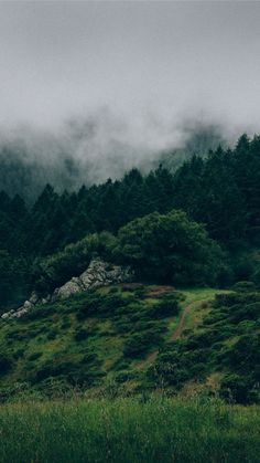 26 Beautiful Back to Nature iPhone Wallpapers   Preppy Wallpapers