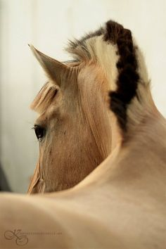 Fjord Horse: the best mane ever!