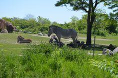 Animal Kingdom, Disney, Photos, Animals, Pictures, Animales, Animaux, Animal, Animais