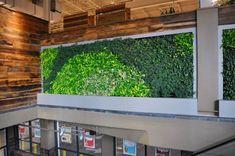 Green wall-Sharon Road Whole Foods, Charlotte NC