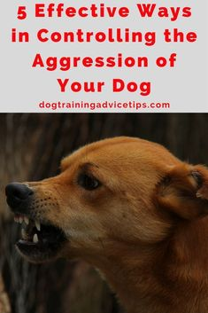 5 Effective Ways in Controlling the Aggression of Your Dog | Dog Training Tips | Dog Obedience Training | Dog Aggression Signs | http://www.dogtrainingadvicetips.com/5-effective-ways-controlling-aggression-dog