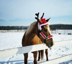 Santa horse! :P