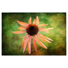 Canvas giclee of a coneflower by artist Lois Bryan.  Product: Wall artConstruction Material: Canvas and wood