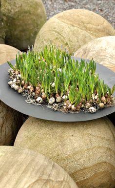 Oogenlust   Spring Inspiration. Bloemwerk waar je lentekriebles van krijgt! Fotografie Marc Wouters.