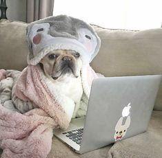 """Nobody said Blogging was easy... or pretty"", Funny French Bulldog #dogtricks #easydogtricks"