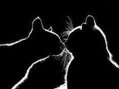 Cats silhouets
