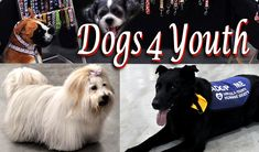 "DOGS 4 YOUTH ( June 16, 2018 )  @ Peach King Centre, Grimsby, Ontario Welcome to the family friendly pet event ""Dogs 4 Youth"". It is one of Niagara's largest pet events, featuring a marketplace selling everything a pet owner could want. Live entertainment, prizes, contests and food."